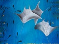 Childrens Hospital Kings Daughters Mural Manta Rays